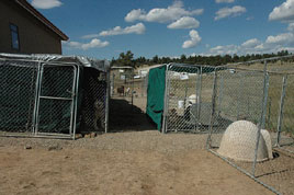 Temporary Dog Enclosures